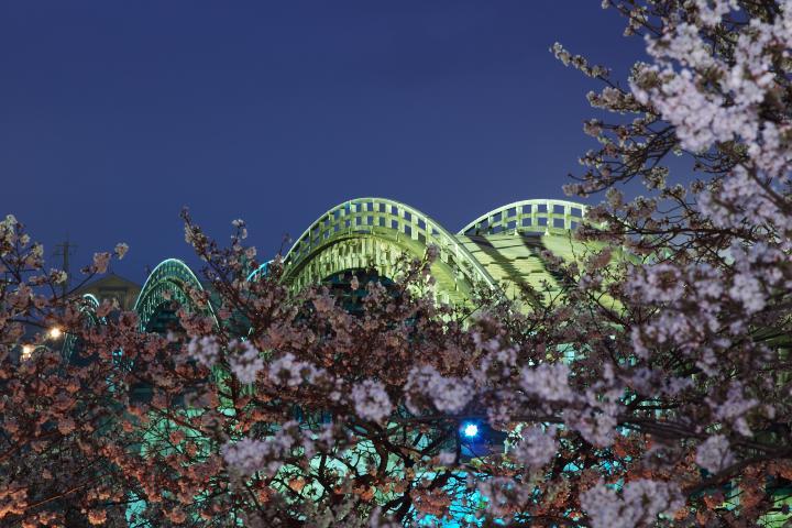 錦帯橋夜桜1403