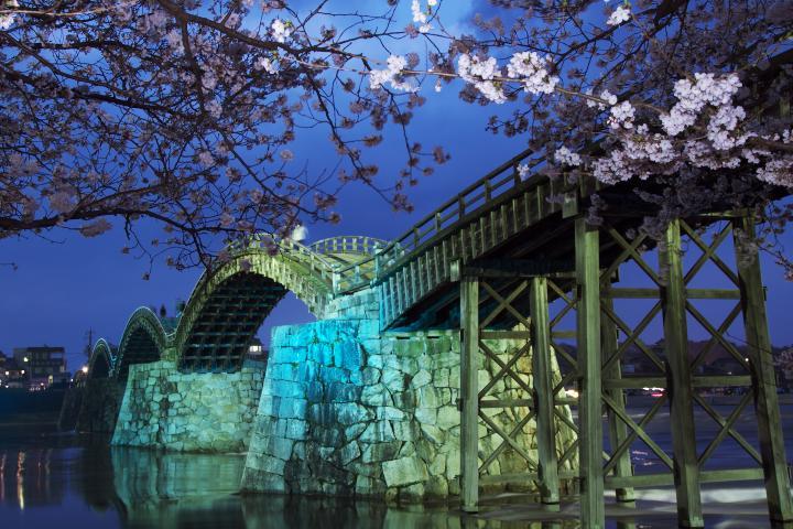 錦帯橋夜桜1404
