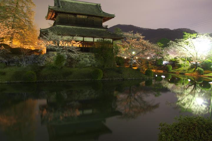 錦雲閣夜桜