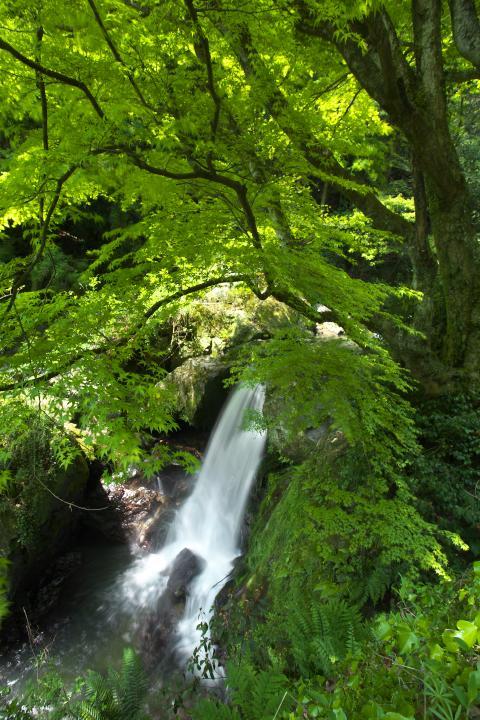 瀬戸兼の滝1401