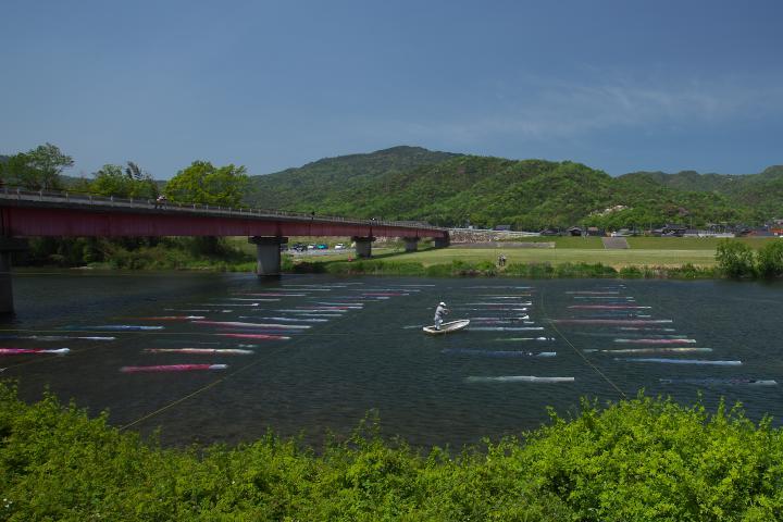 佐波川を泳ぐ鯉のぼり1404