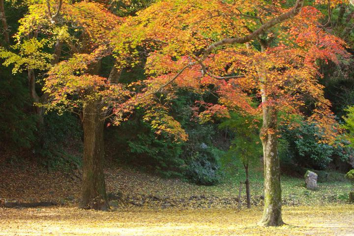 2014紅葉谷公園05