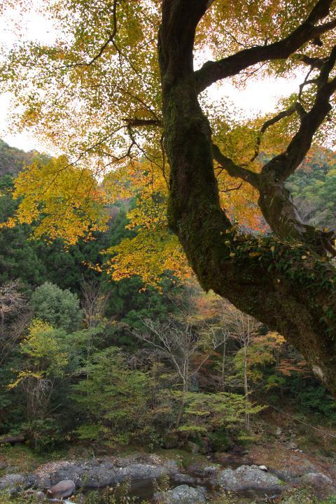 2014木谷峡紅葉01