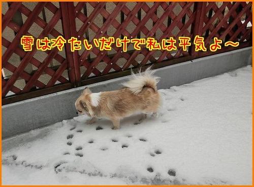 大雪9751