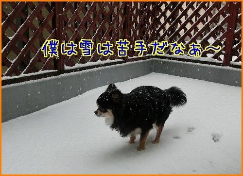 大雪9741