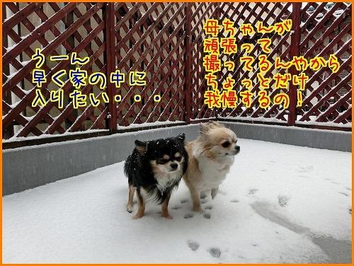 大雪9744