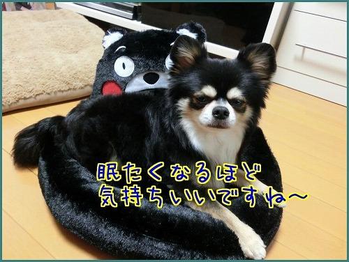 くまモン9805