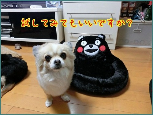 くまモン9803