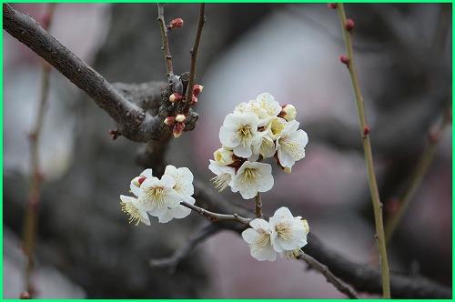 大阪城梅4683