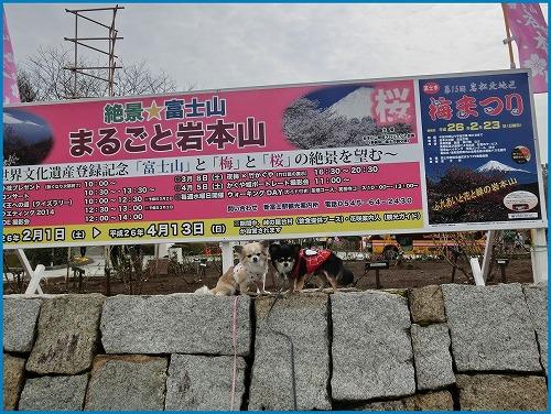 岩本山9972