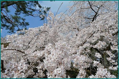 京都御苑5199