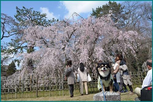 京都御苑5189
