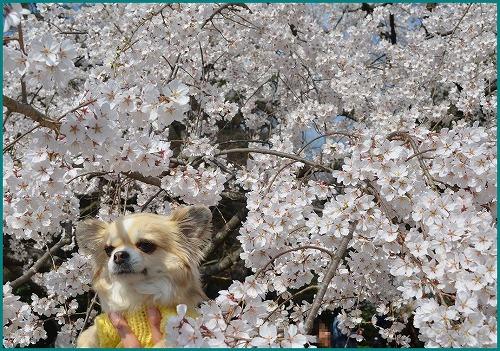 京都御苑5198