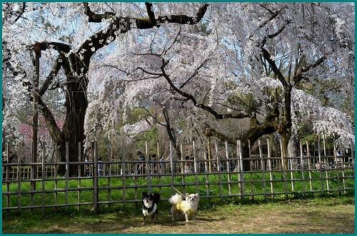 京都御苑5208