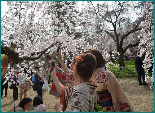 京都御苑5202