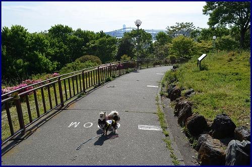 千島公園5499