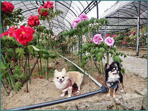 花しょうぶ 園0390