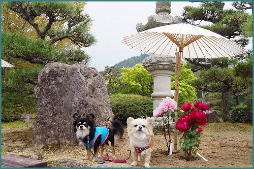 花しょうぶ 園2074