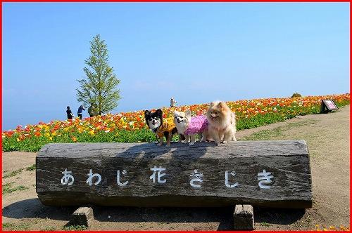 花さじき5329