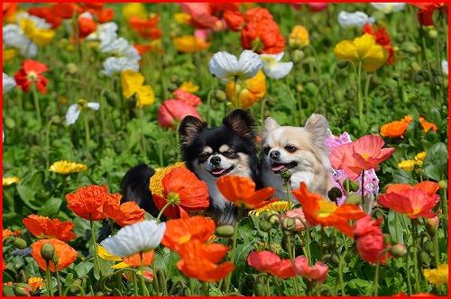 花さじき5333