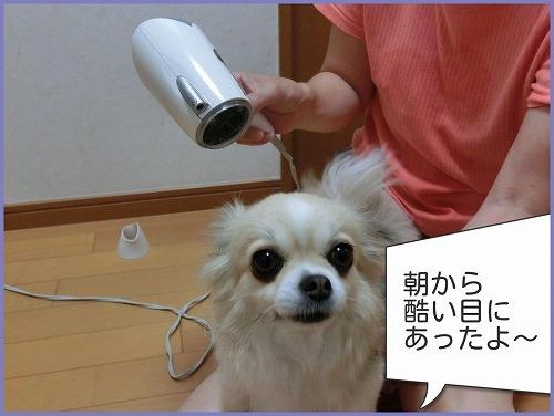 朝シャン0726