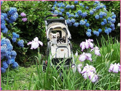 花の郷801