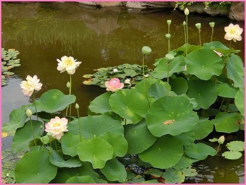 花の郷803