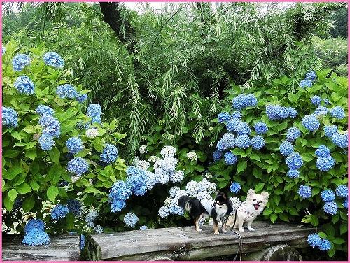 花の郷810