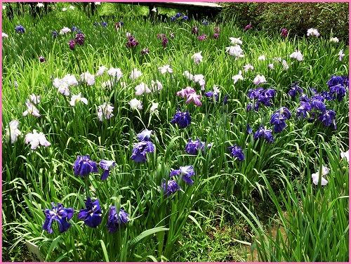 花の郷816