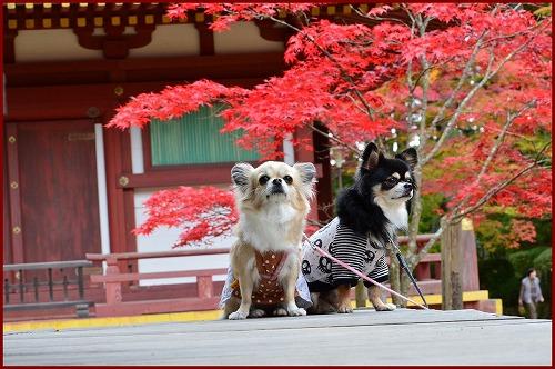 高野山2014前 (9)