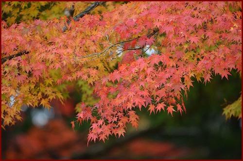 高野山2014前 (10)