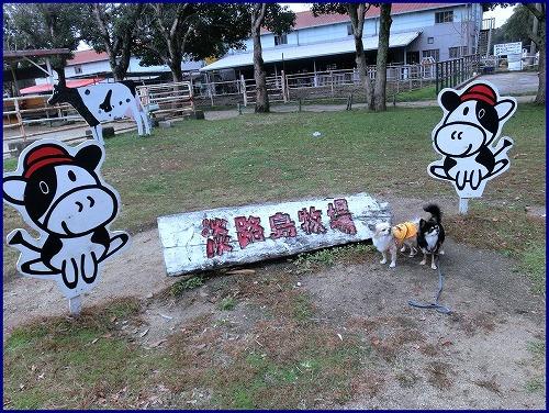 淡路島牧場 (3)