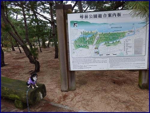 津田の松原 (3)