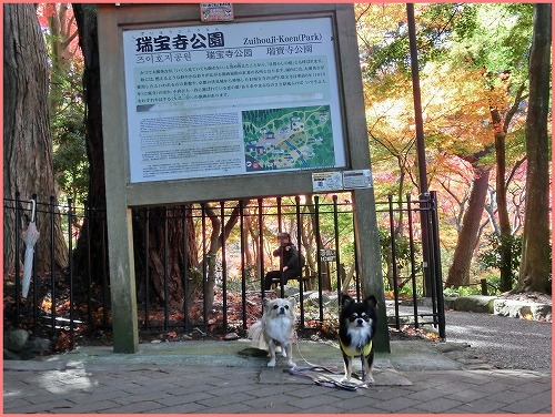瑞宝寺公園2014 (2)