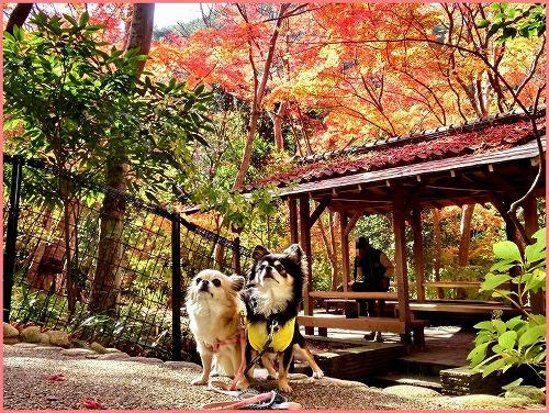 瑞宝寺公園2014 (3)