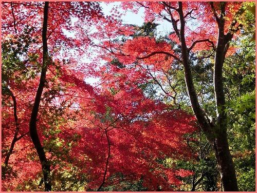 瑞宝寺公園2014 (7)