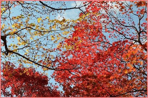瑞宝寺公園2014 (9)