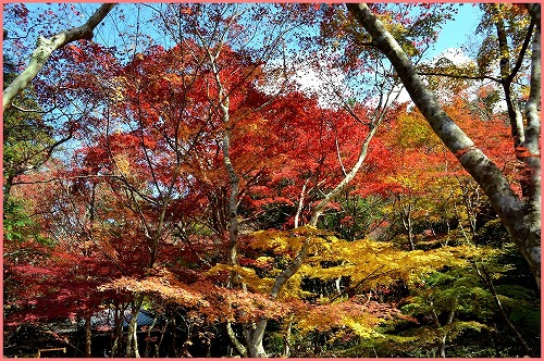 瑞宝寺公園2014 (12)