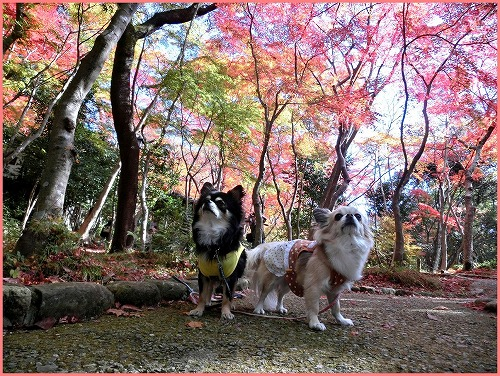 瑞宝寺公園2014(18)