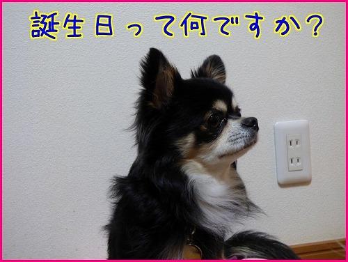 ニケ4歳 (1)