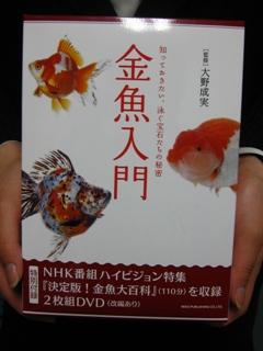 金魚入門1