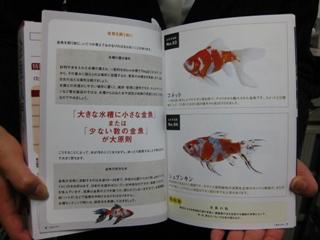 金魚入門2