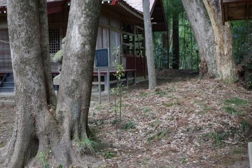 4真木土塁 (1200x800)