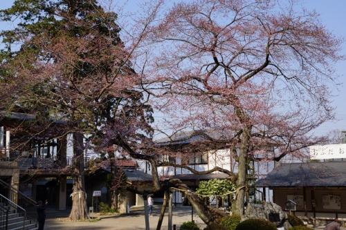 2高麗神社のヒガン (1200x800)