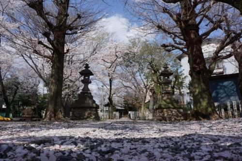 11浮島神社 (1200x800)
