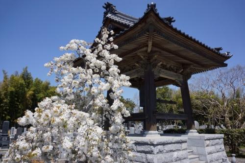 3長源寺 (1200x800)