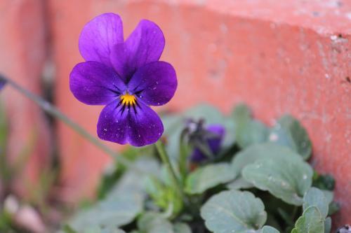 花たち 5