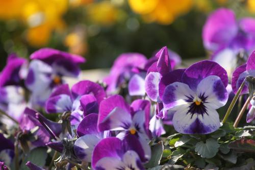 花たち 2