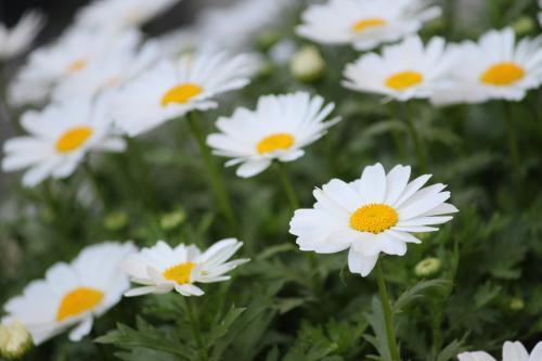 みんなの花