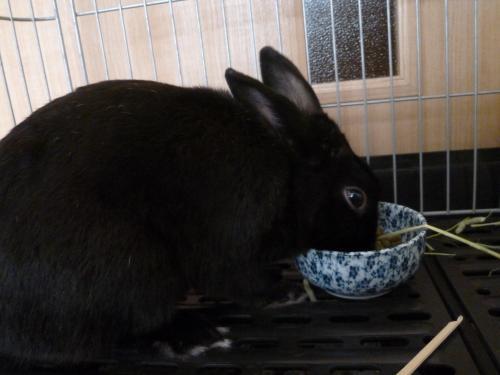 ウサギのソルト 6